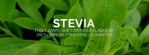 La stevia como alternativa