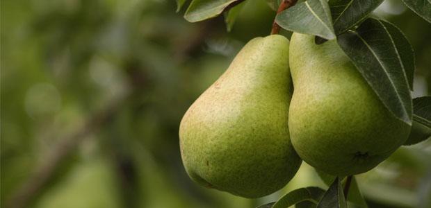 Conoce los beneficios de la pera