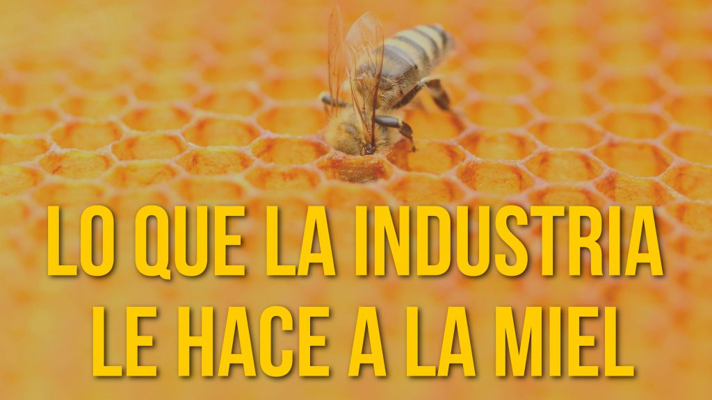 La realidad sobre la miel