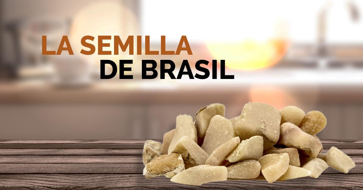 semilla de brasil pierdere în greutate